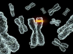 mutacije